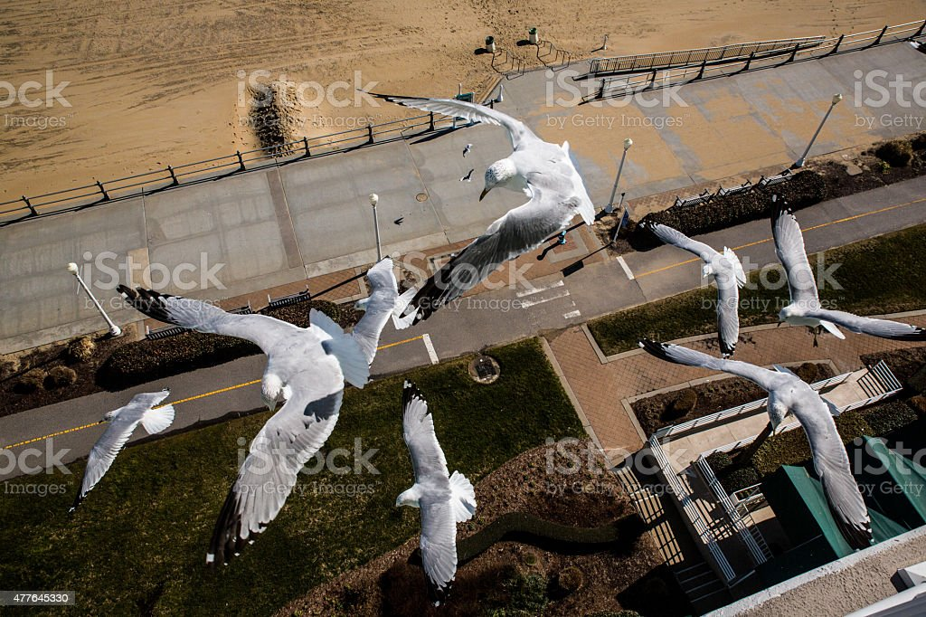 Seagulls fly over the boardwalk at Virginia Beach stock photo