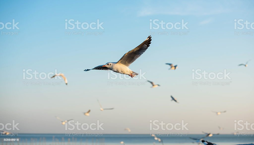 Seagulls fly over the cold light stock photo