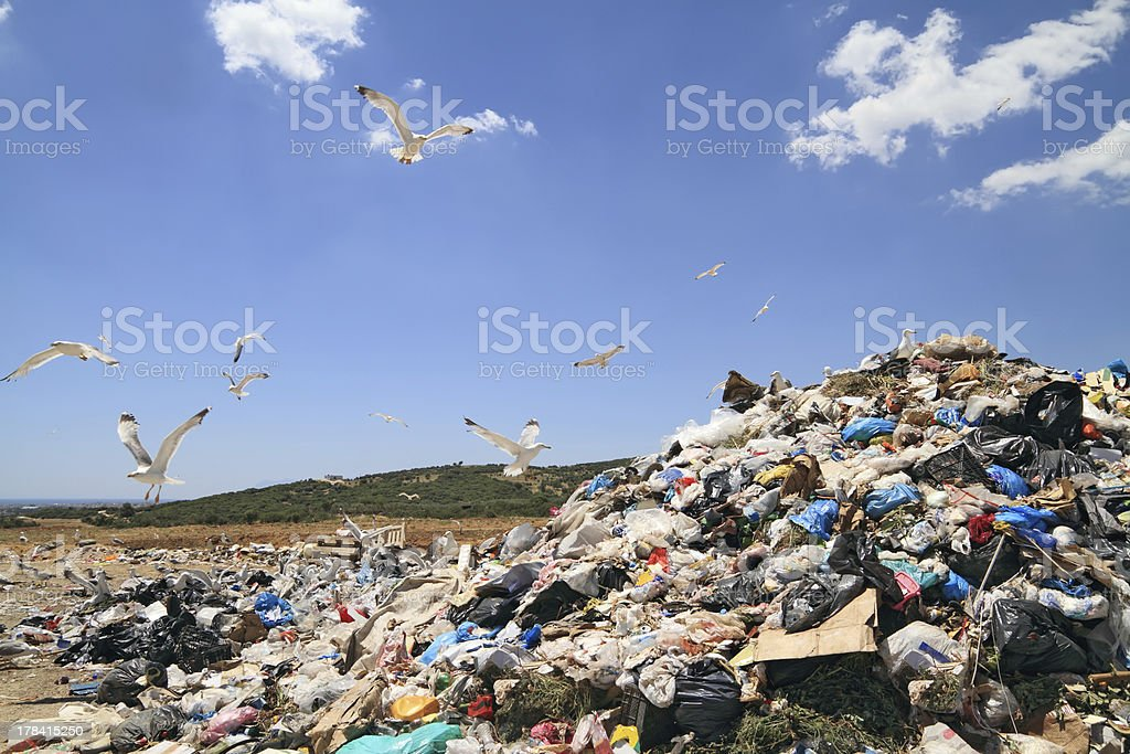 Seagulls flying above a landfill searching for food stock photo