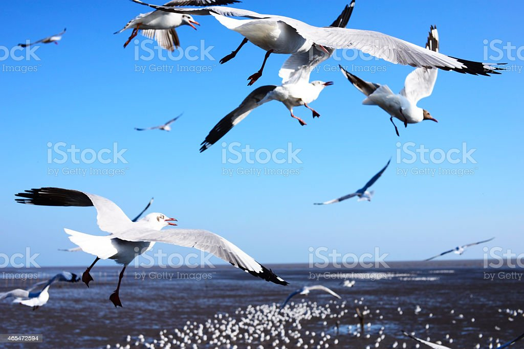 seagulls flying in blue sky near by beach royalty-free stock photo