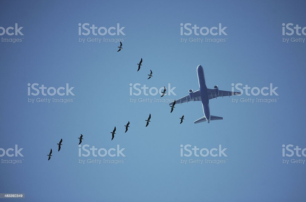 Seagulls flying in front of a passenger plane stock photo