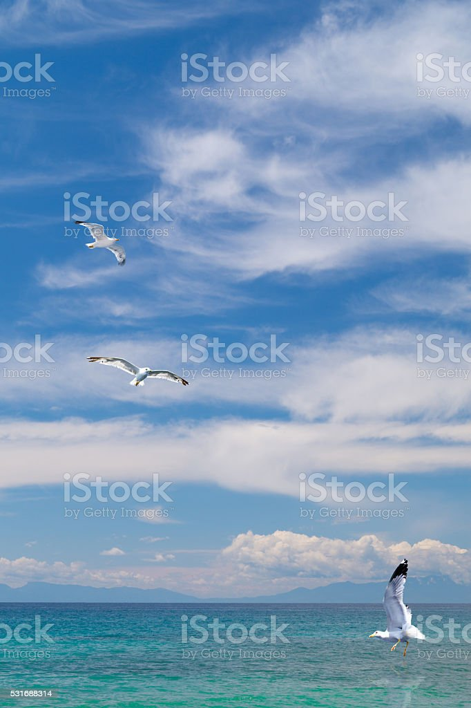 Seagulls flying on beautiful blue sky and clouds stock photo