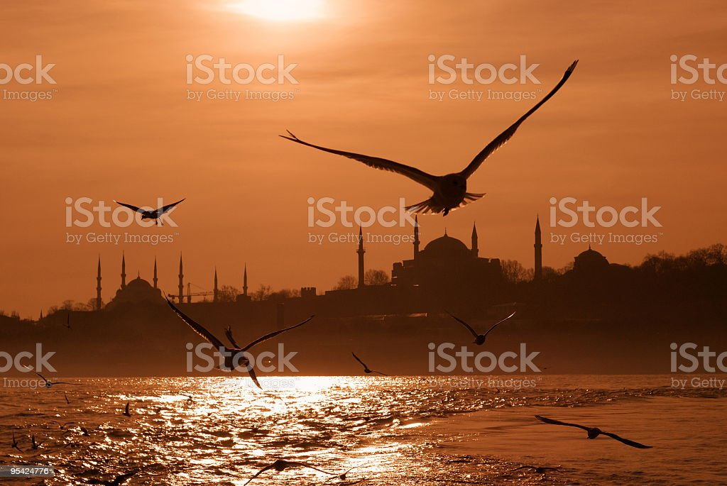 Seagulls flying over a beach in Istanbul at sunrise stock photo