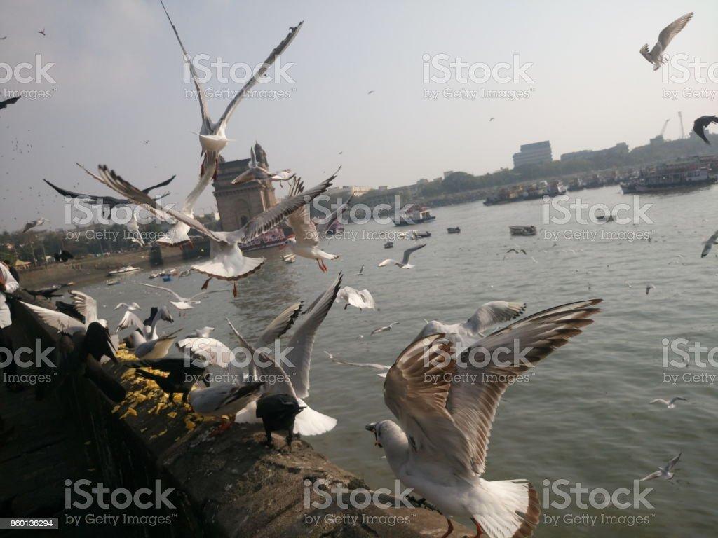 Seagulls flying over sea against sky on sunny day, Mumbai, India