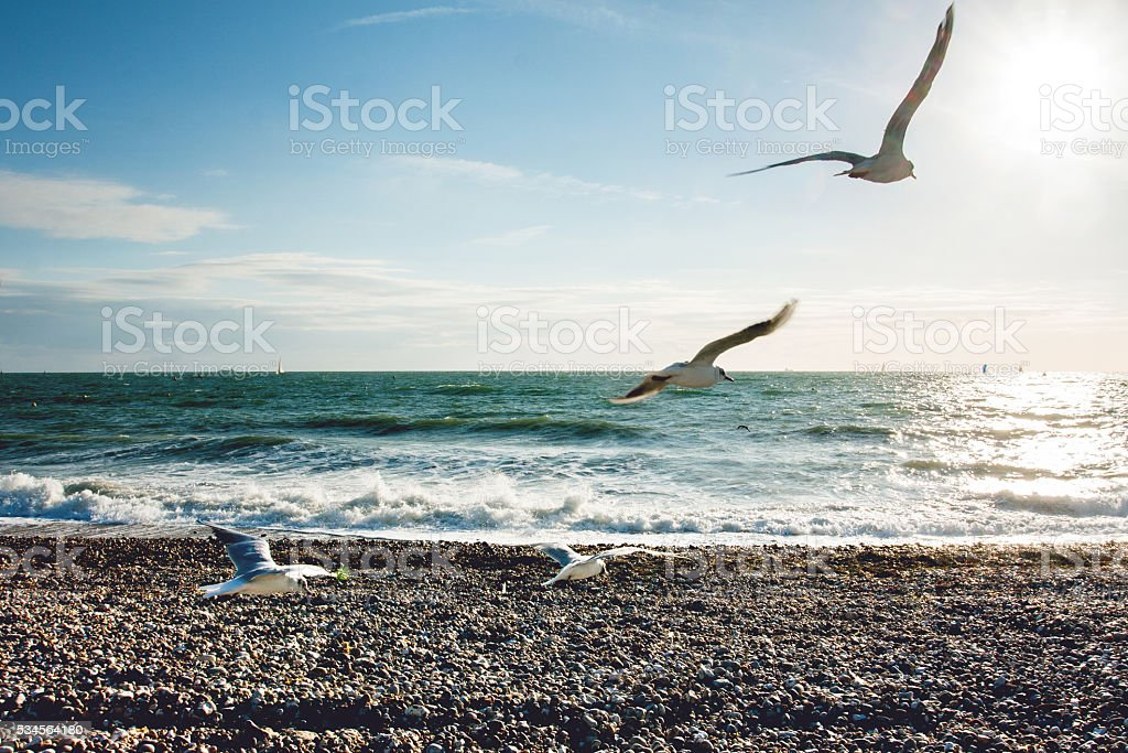 seagulls flying over the sea stock photo