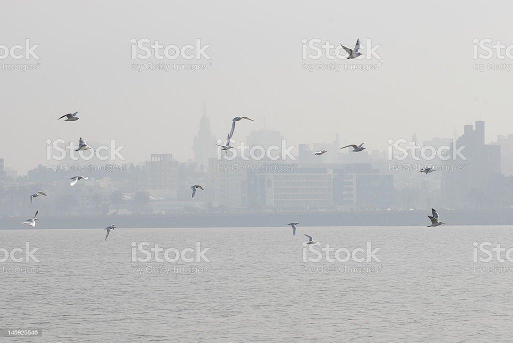 Mouettes volant photo libre de droits