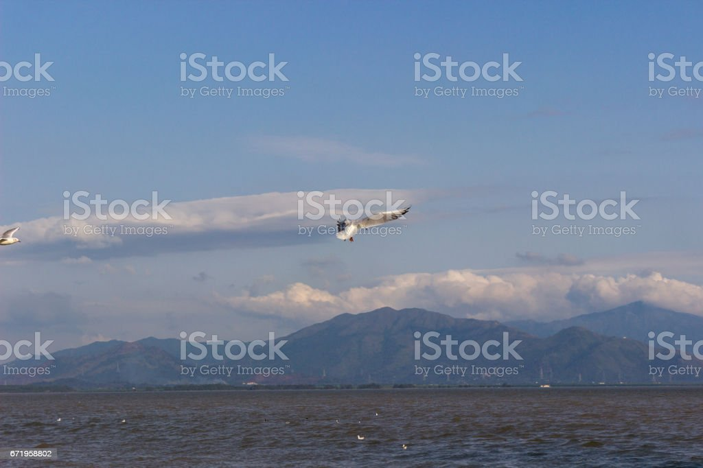 Seagulls flying under the blue sky stock photo