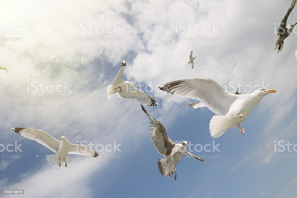 Seagulls frying overhead royalty-free stock photo