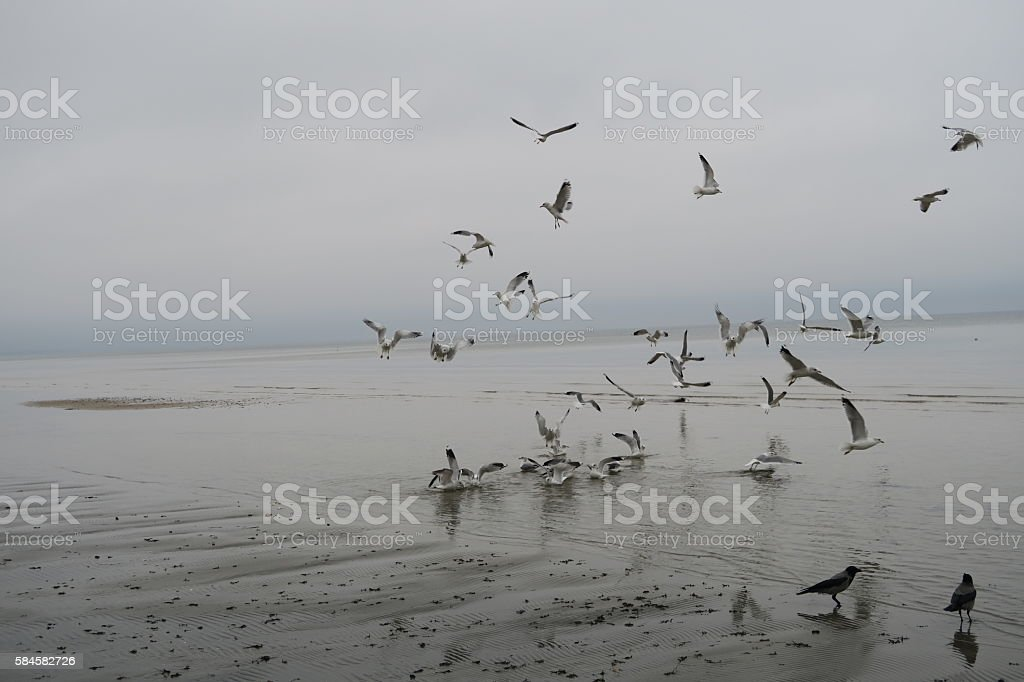 Seagulls in early spring stock photo