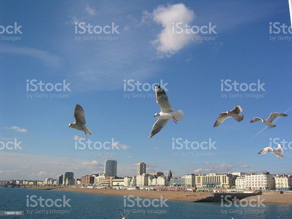 Seagulls in flight - Brighton stock photo
