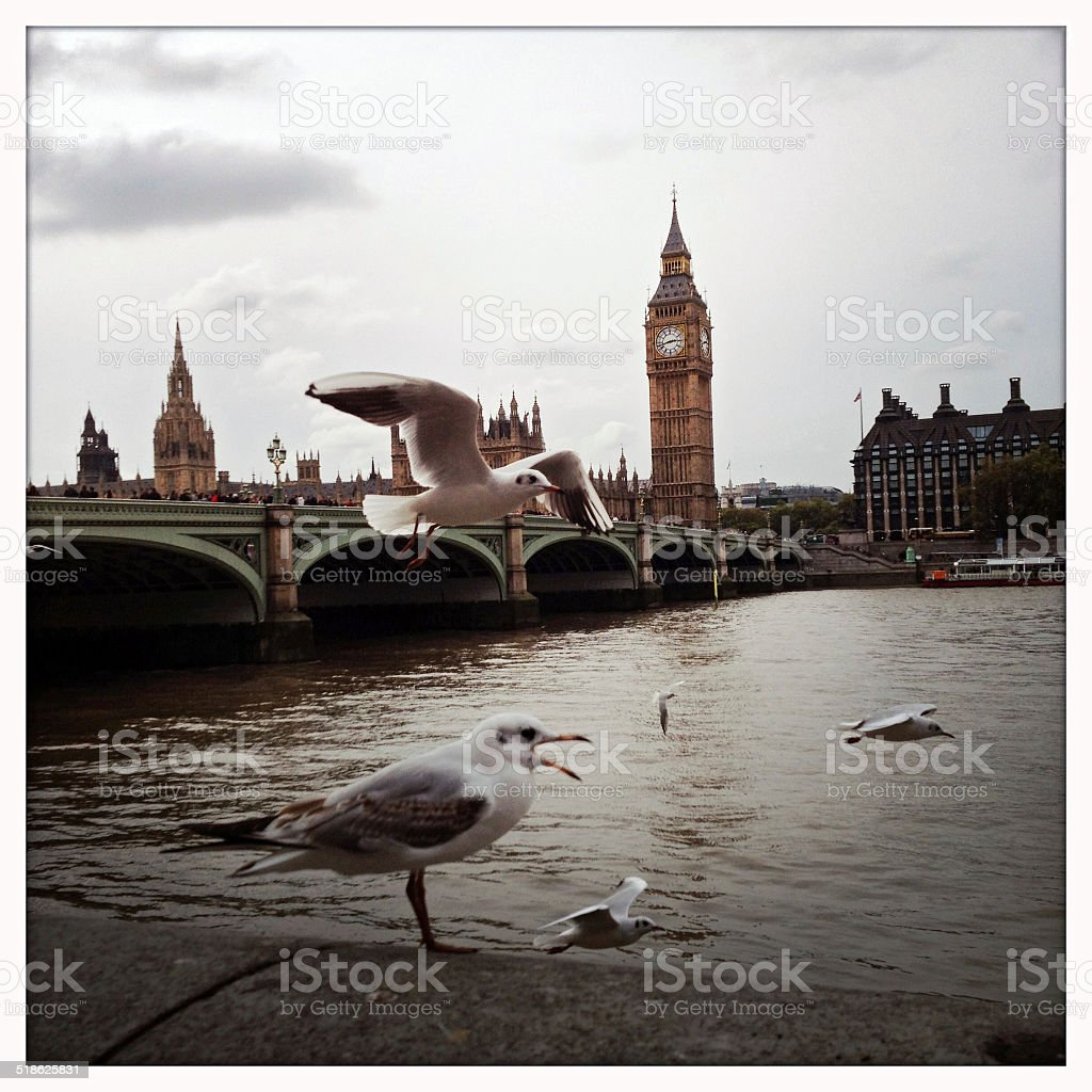 Seagulls in front of Houses of Parliament with Big Ben stock photo