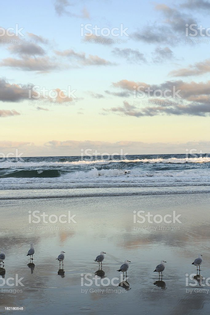 Seagulls in Heaven royalty-free stock photo