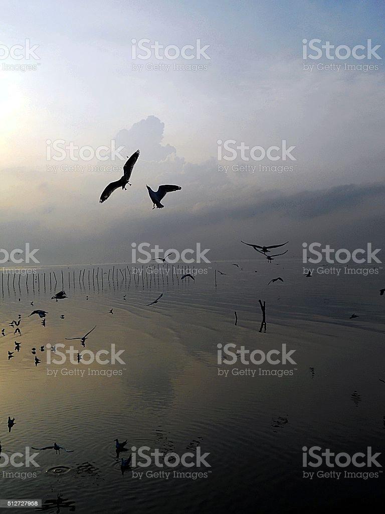 Seagulls in morning stock photo