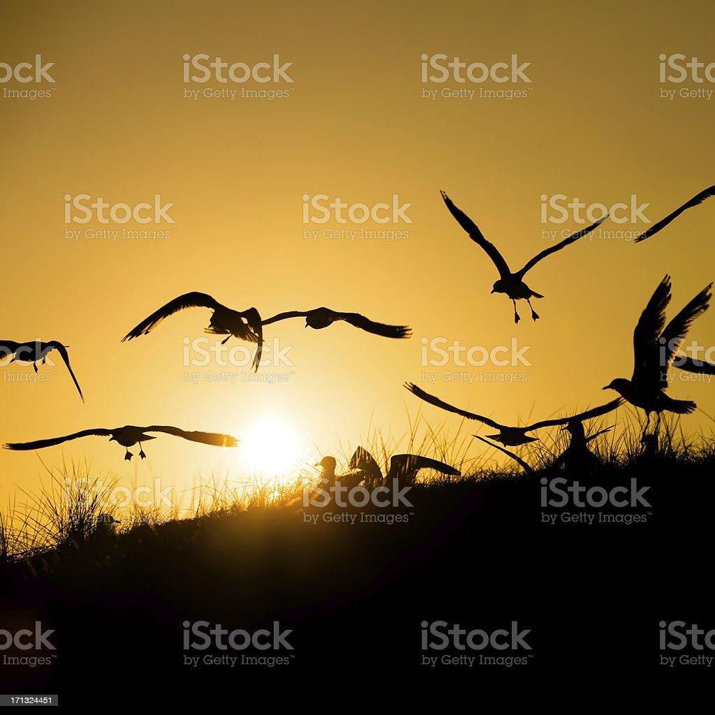 Seagulls in the evening sun stock photo