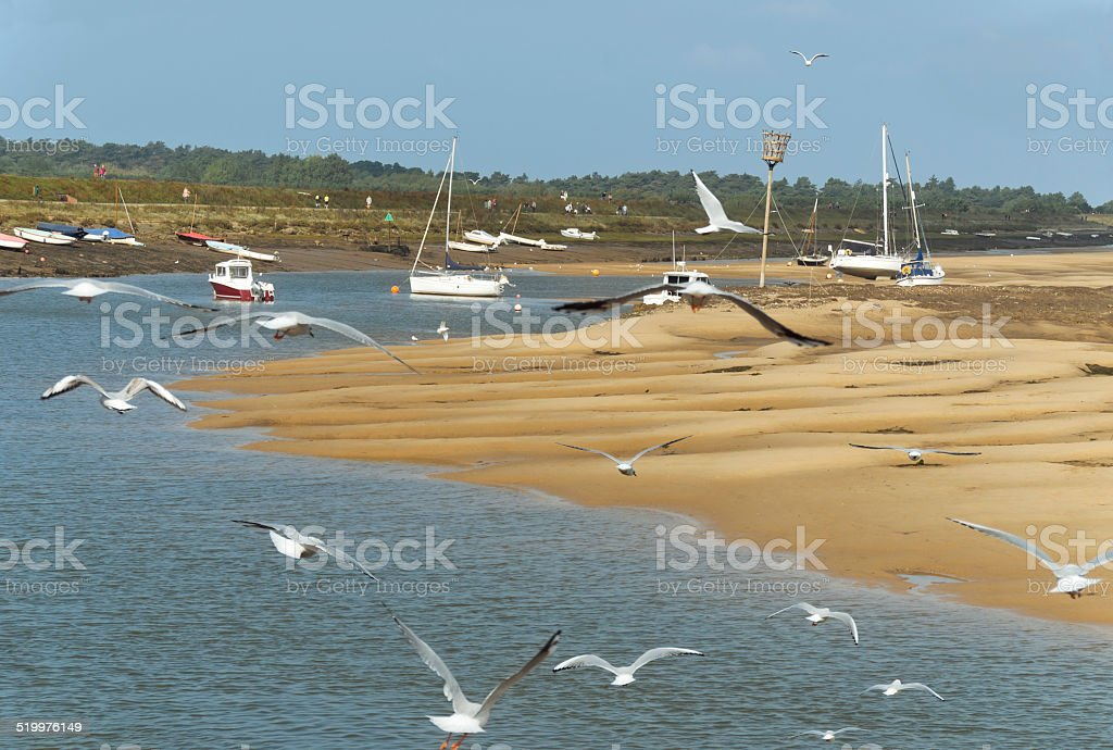 Seagulls in the harbour at Wells, Norfolk stock photo