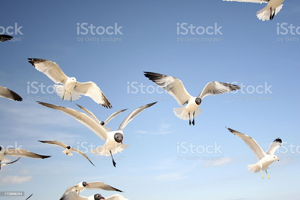 Seagulls in the Sun royalty-free stock photo