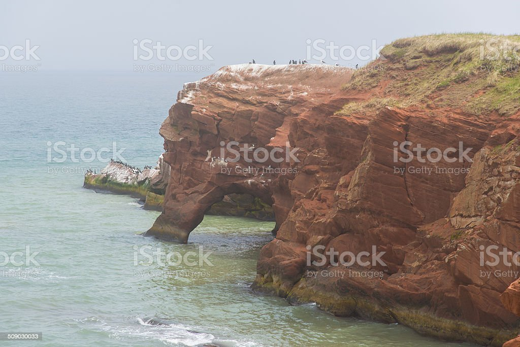 Seagulls in their nest on a red cliff. royalty-free stock photo