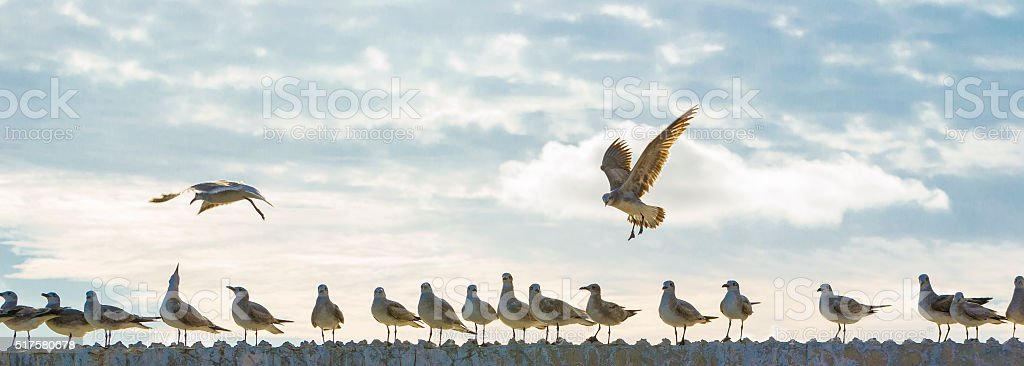 Seagulls liberation royalty-free stock photo