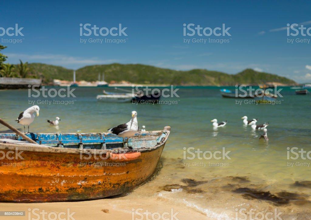 Seagulls on a fishing boat Buzios stock photo