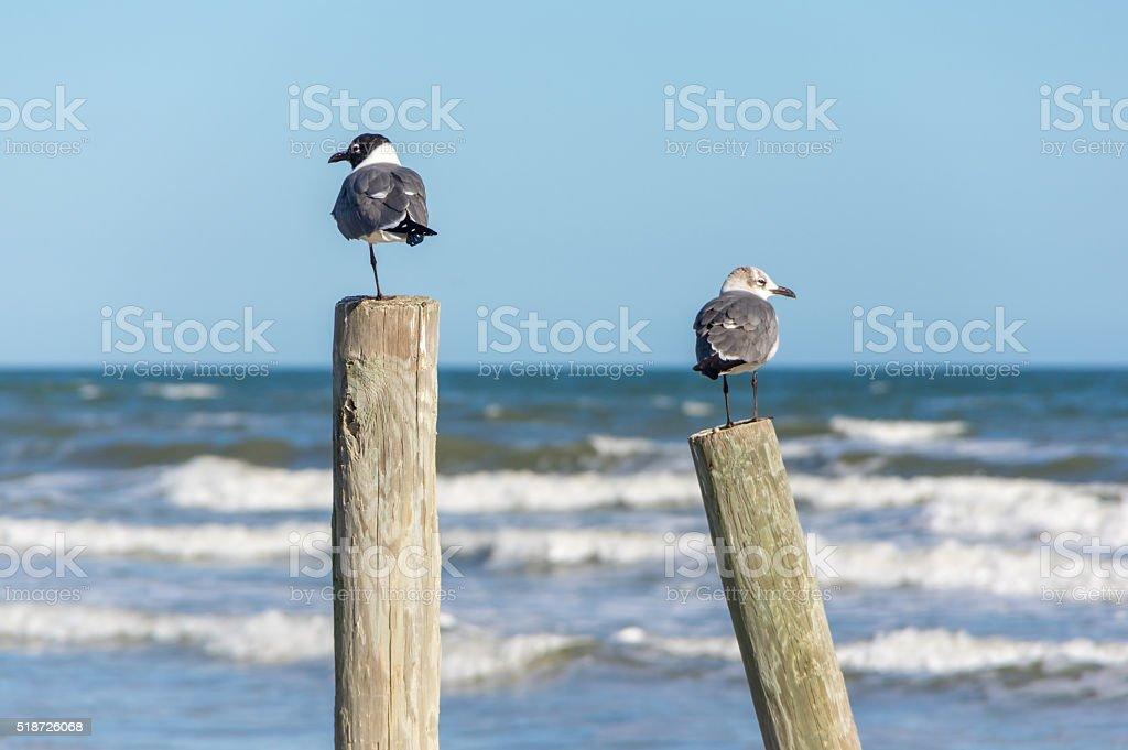 Seagulls on a Post stock photo