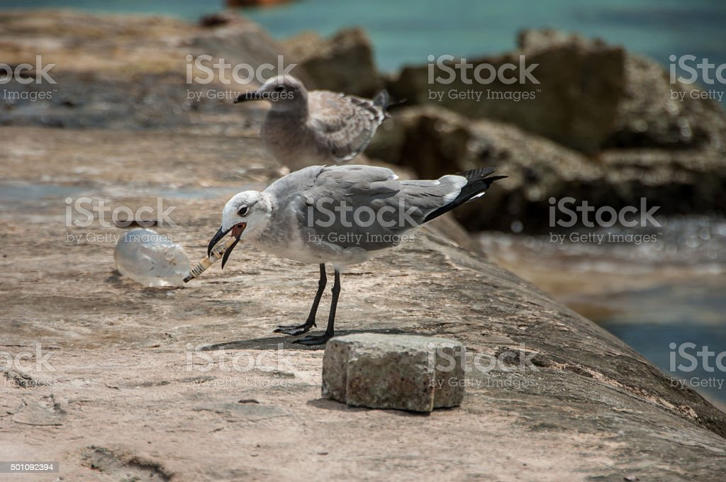Seagulls on a rock at the beach stock photo
