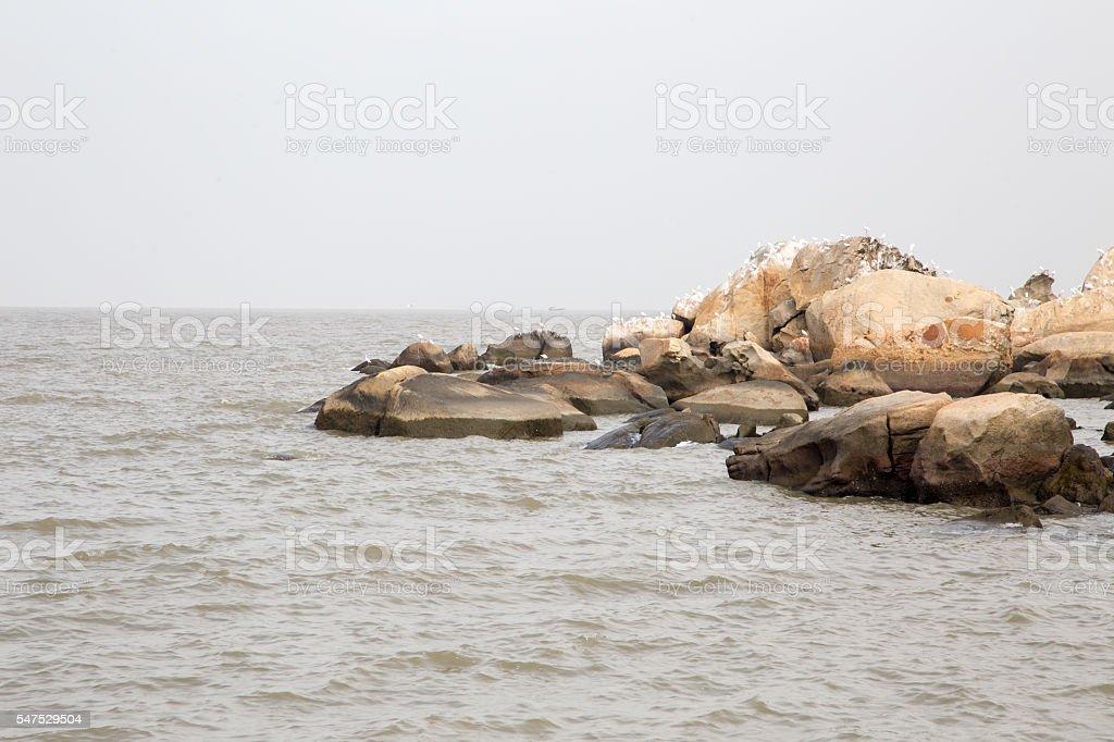 Seagulls on a rock stock photo