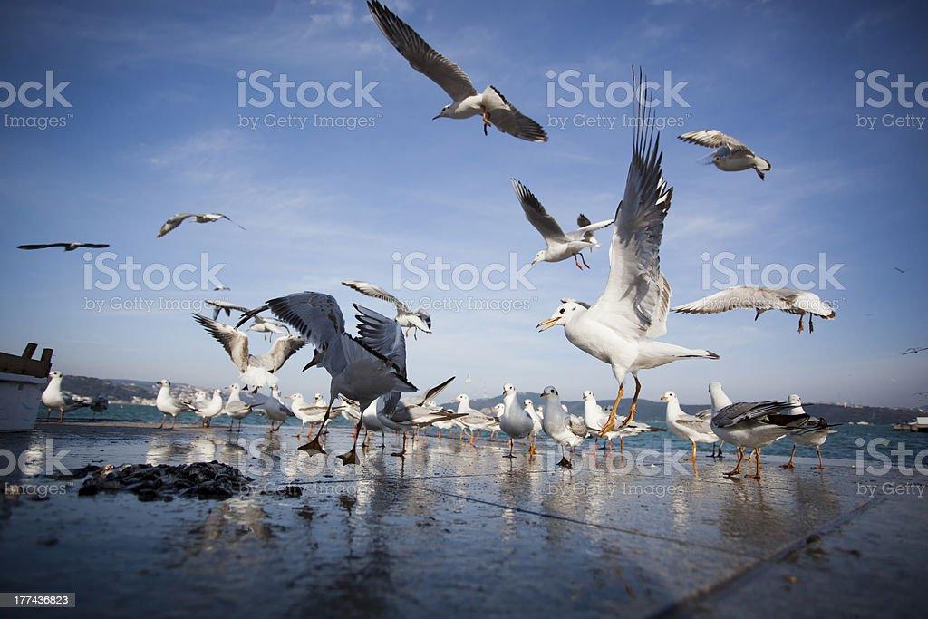 seagulls on air stock photo