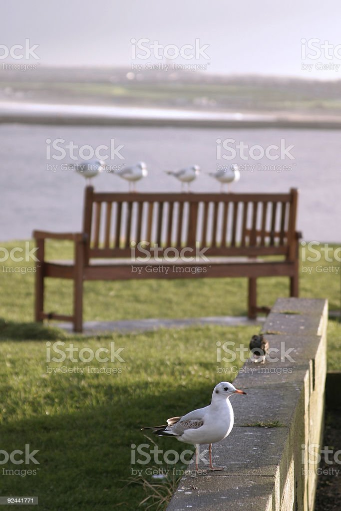 Seagulls on bench 2 stock photo