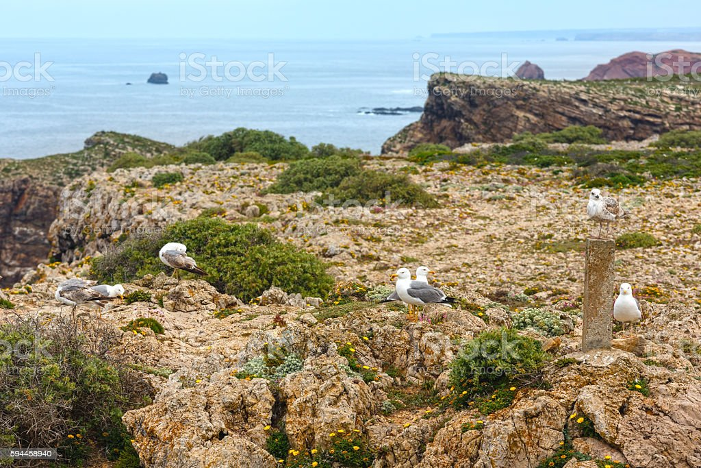 Seagulls on Cape St. Vincent, Algarve, southern Portugal. stock photo