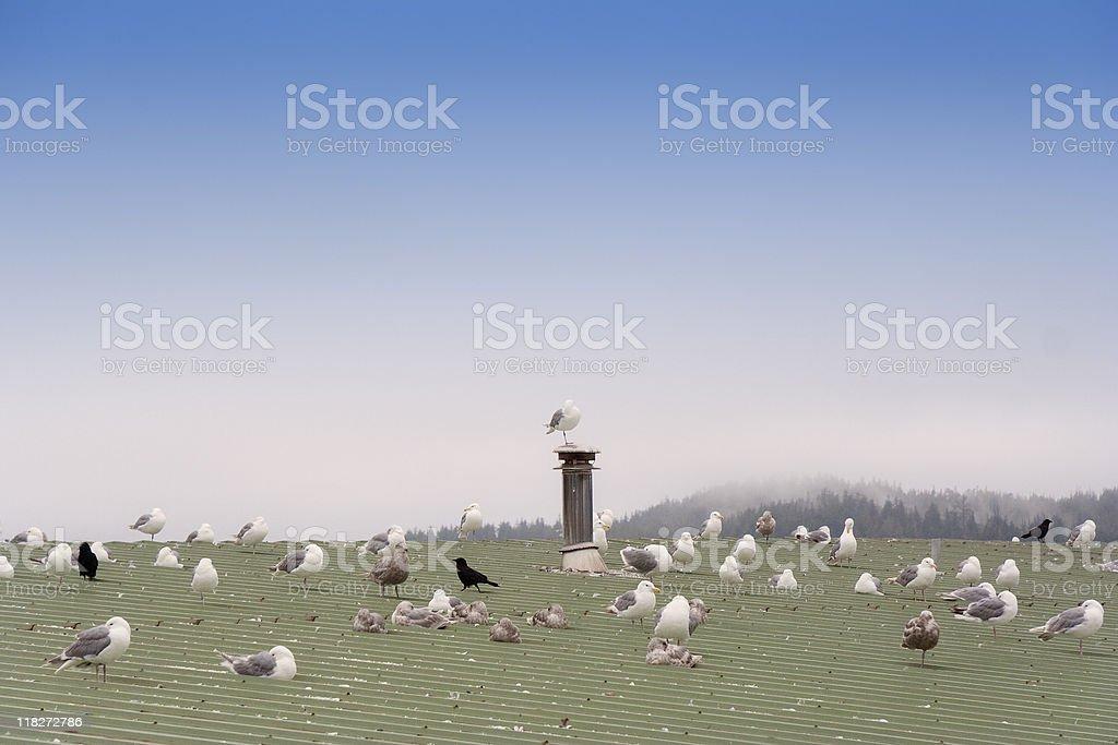 Seagulls on green Roof stock photo