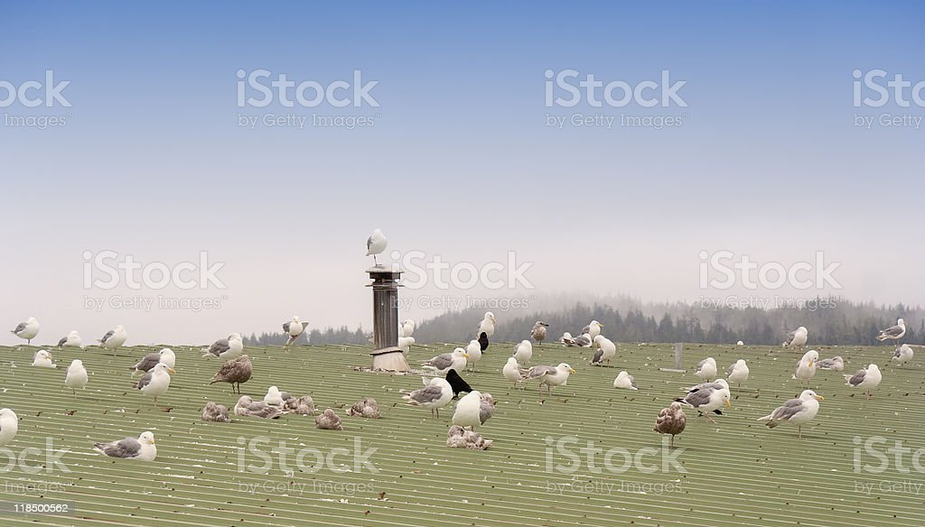 Seagulls on green Roof royalty-free stock photo