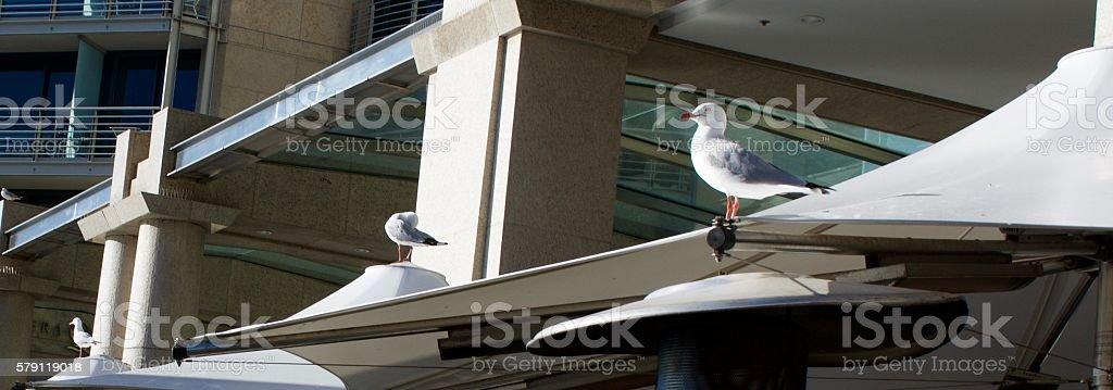 Seagulls on patio umbrellas stock photo
