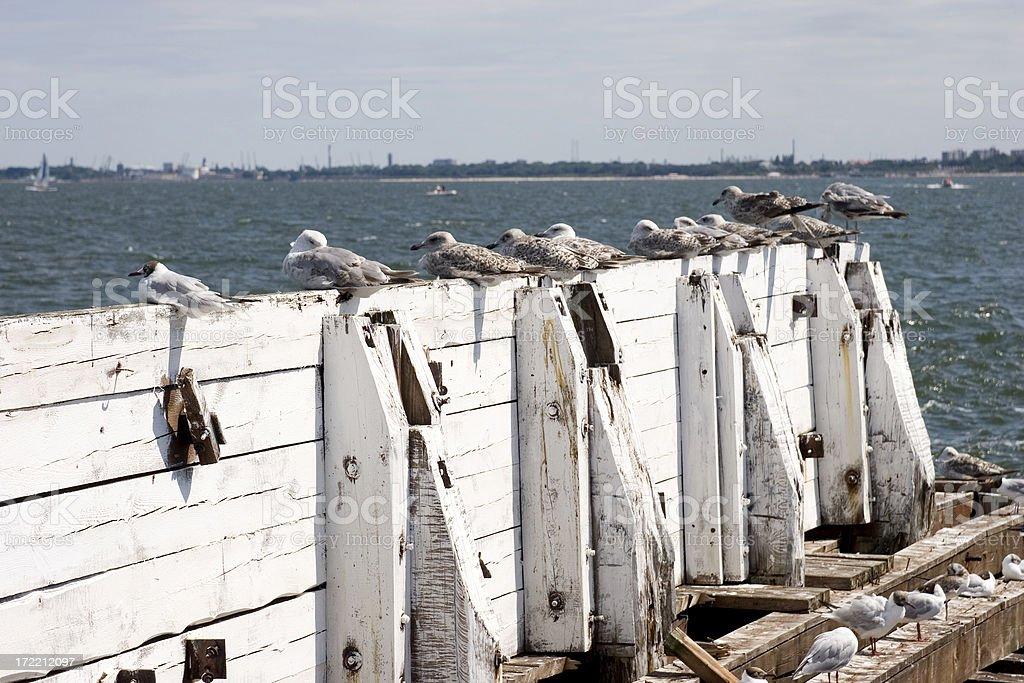 Seagulls on pier stock photo