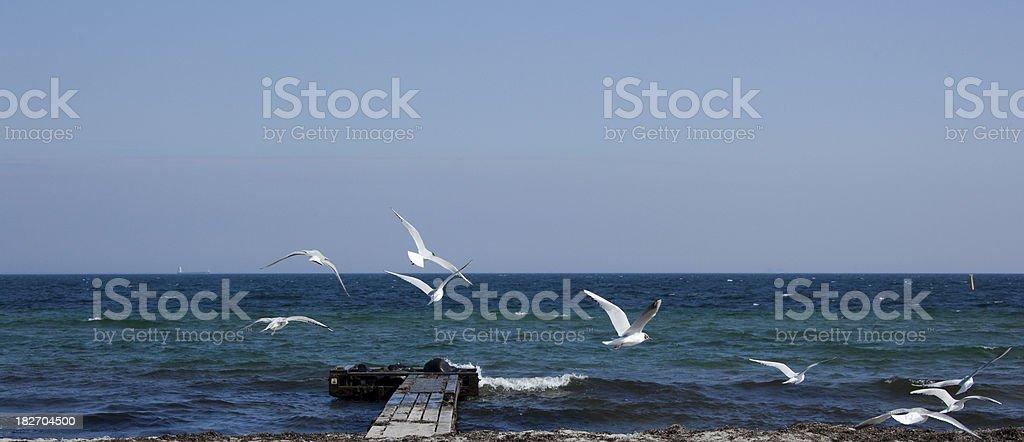 Seagulls on the beach stock photo