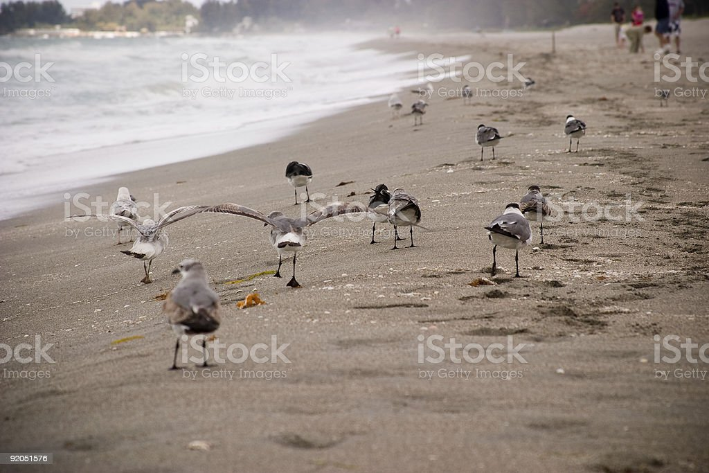 Seagulls on the Beach stock photo