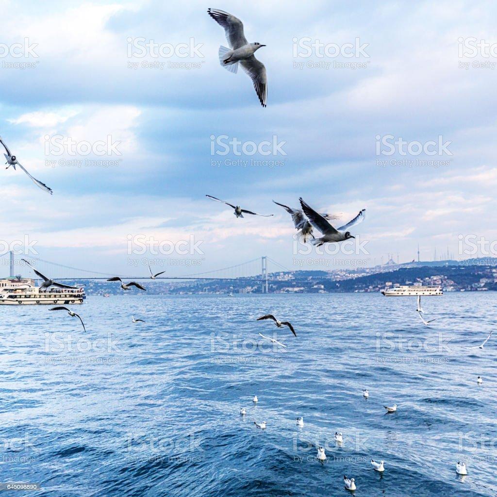 Seagulls on the Bosphorus stock photo