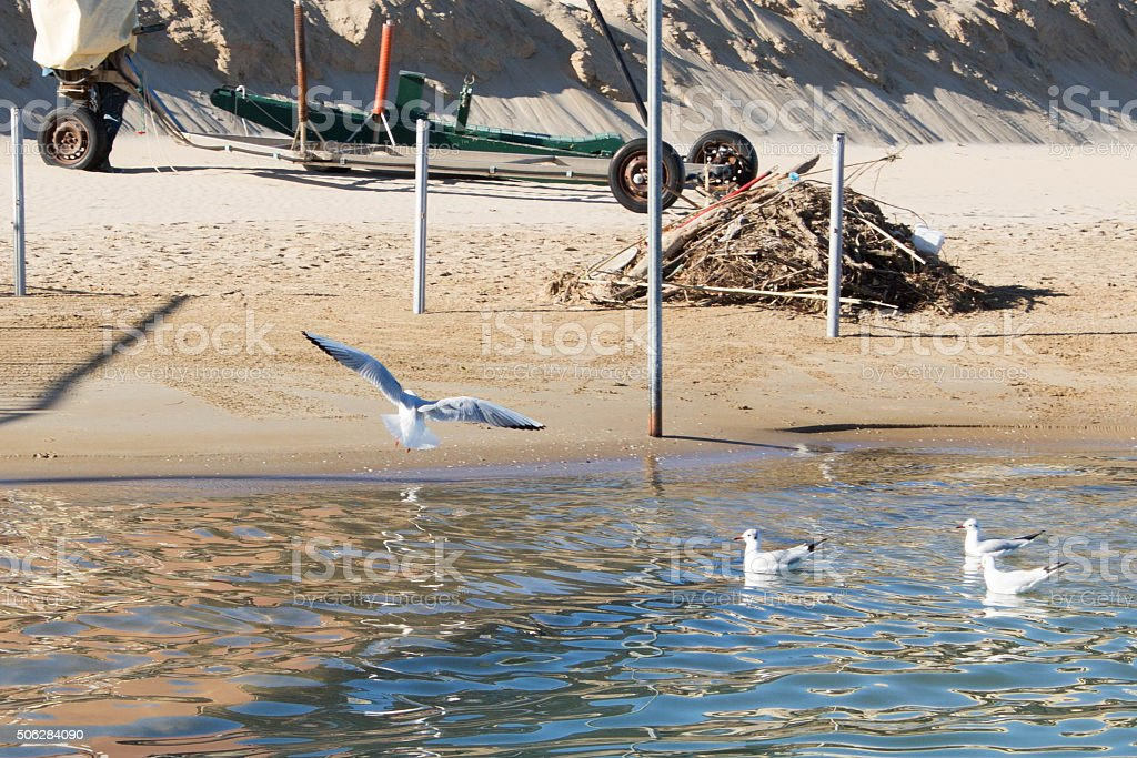 Seagulls on the foreshore stock photo