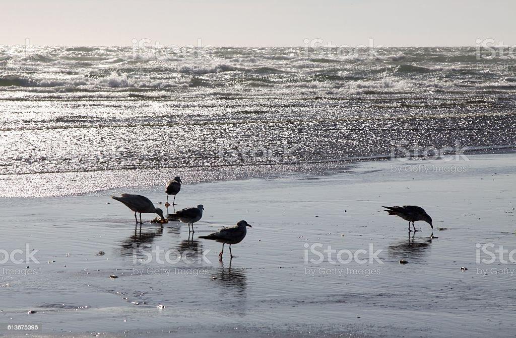 Seagulls On The Pacific Ocean Beach stock photo