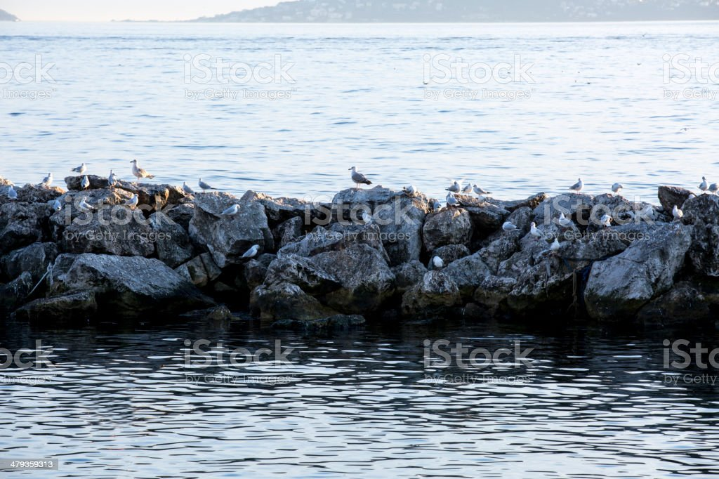 Seagulls on the rocks royalty-free stock photo