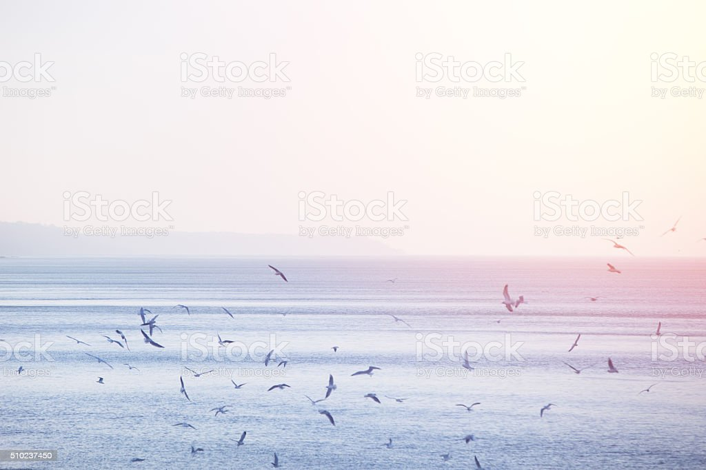 Seagulls over the Baltic sea stock photo