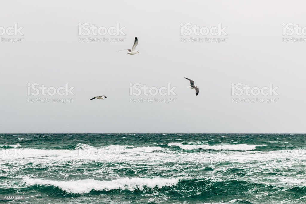 Seagulls over the sea on a cloudy day stock photo