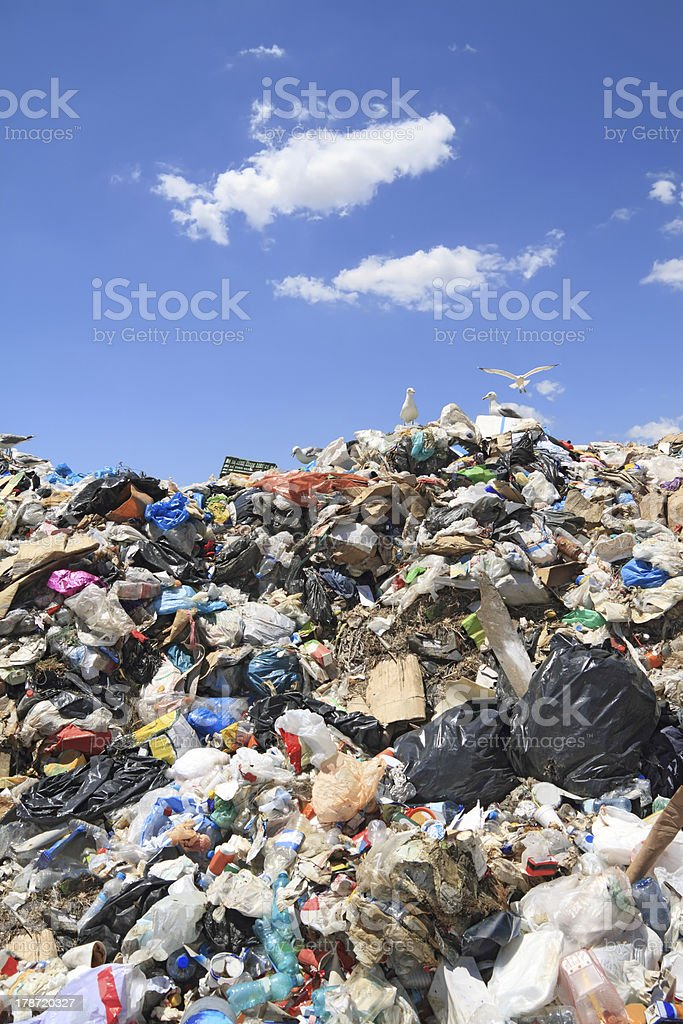 Seagulls picking through a garbage dump stock photo