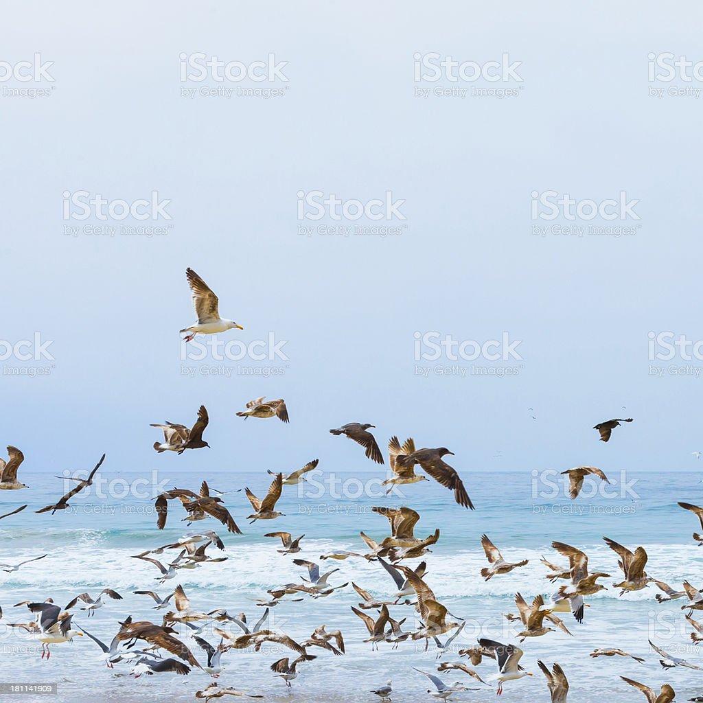 Seagulls royalty-free stock photo
