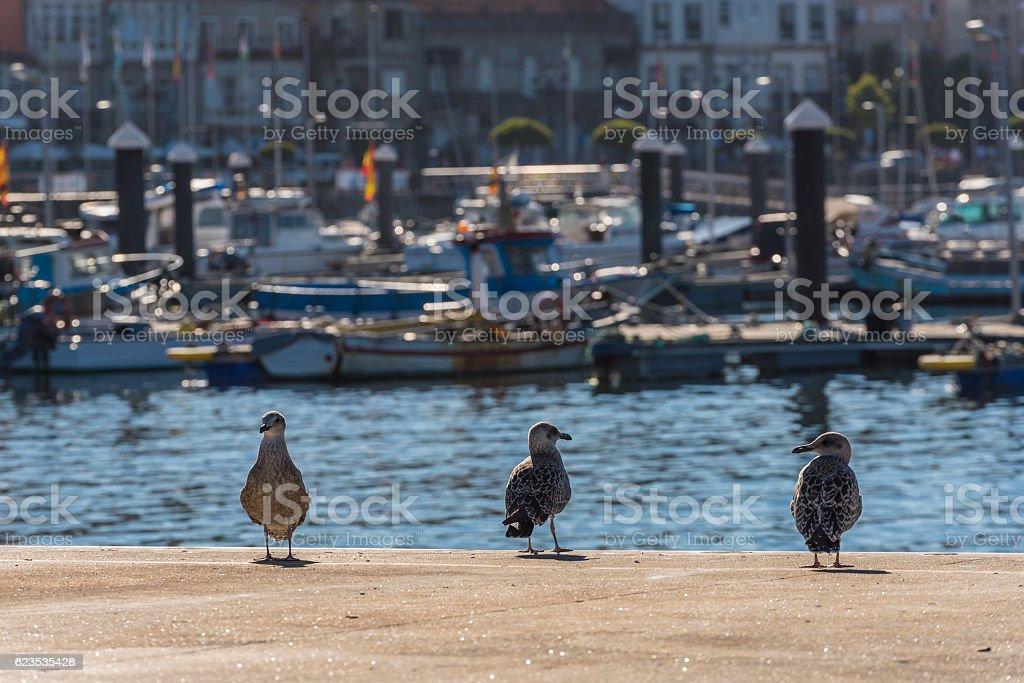 Seagulls. stock photo