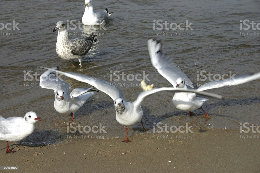 seagulls #1 royalty-free stock photo