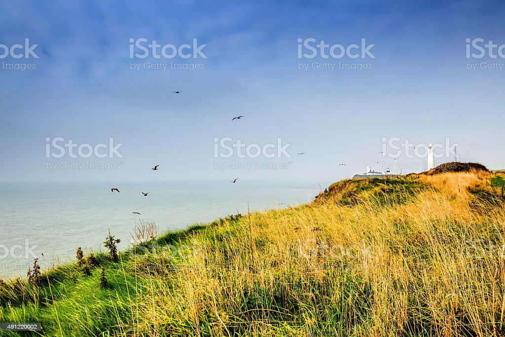 Seagulls riding the thermals at Nash Point lighthouse stock photo