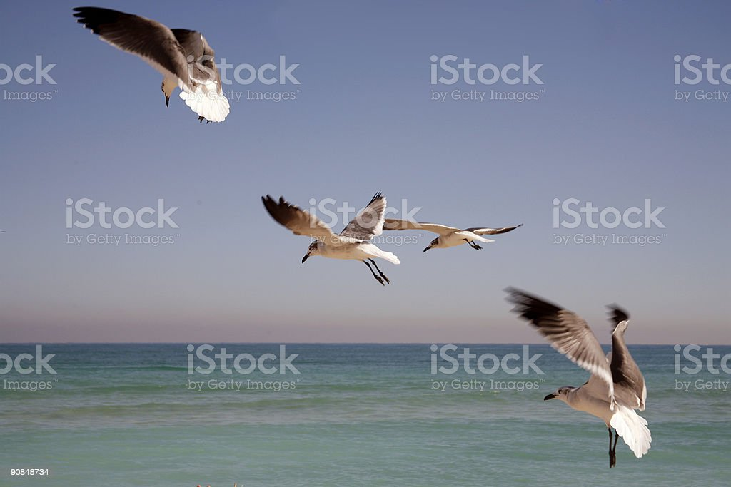 Seagulls rising stock photo