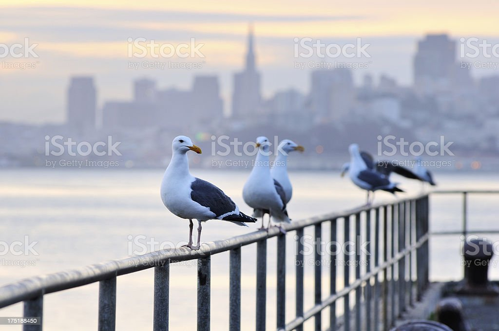Seagulls sitting on barrier in San Fracisco pier royalty-free stock photo