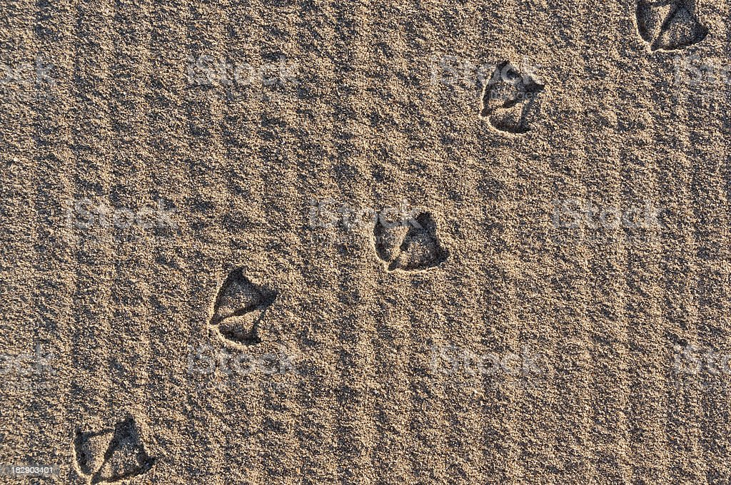 Seagull's Track in the Sand (Horizontal) stock photo