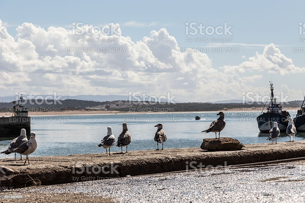 Seagulls wait for a boat with fresh fish stock photo